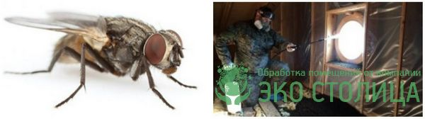 kak izbavitsya ot mux 11 - Как избавиться от мух в доме и квартире быстро и легко