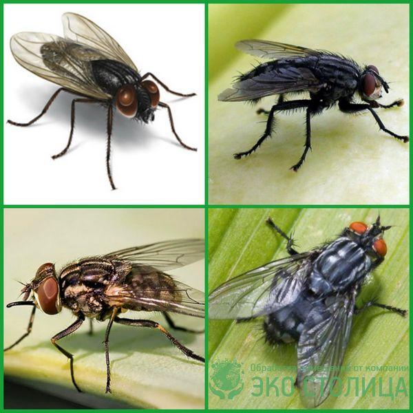 kak izbavitsya ot mux 12 - Как избавиться от мух в доме и квартире быстро и легко