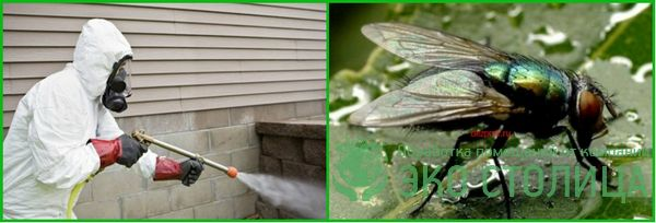 kak izbavitsya ot mux 14 - Как избавиться от мух в доме и квартире быстро и легко