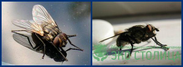 kak izbavitsya ot mux 16 - Как избавиться от мух в доме и квартире быстро и легко