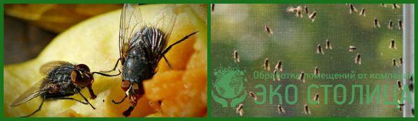 kak izbavitsya ot mux 18 - Как избавиться от мух в доме и квартире быстро и легко