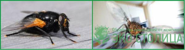 kak izbavitsya ot mux 19 - Как избавиться от мух в доме и квартире быстро и легко