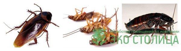 Уничтожение тараканов в квартире и частном доме с гарантией