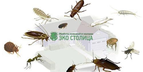 Борьба с насекомыми Москва