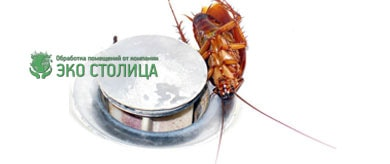 Поморить тараканов
